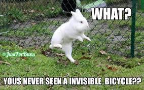 Funny Bike Memes - rabbit ramblings funny bunny monday meme day