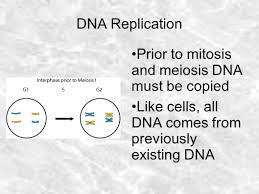 dna replication watson and crick noticed the huge benefit of