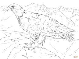 bald eagle from alaska coloring page free printable coloring pages