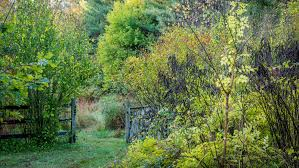 small trees in small gardens about the garden magazine time to put the garden to bed the new york times