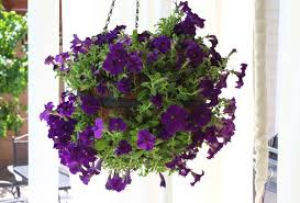 hanging flowers diy hanging flower spheres p g everyday united states en