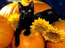 fall pumpkins background pictures top 7 cats with pumpkins animalblog cute black and white