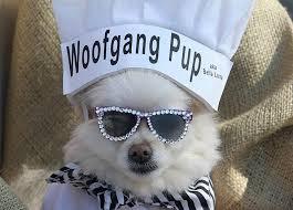 Halloween Dog Costume 38 Halloween Costumes Dogs 2017 Purewow