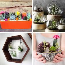 pinterest 25 idées déco avec des cactus des succulentes et des