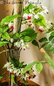 flowers in my garden u2013 the secret formula