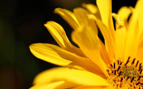 flower petals 39 ideas using flower petals