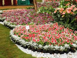 151 best gardening ideas images on pinterest gardening plants