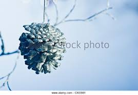 pine cone stock photos pine cone stock