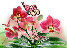 monarch butterfly butterflies orchid flowers closeup
