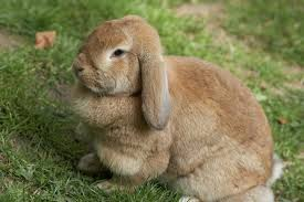 9 bunny breeds cute words mnn mother nature