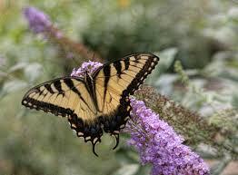 Gambar alam sayap margasatwa serangga botani kuning Flora
