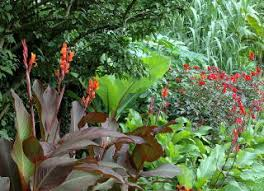 awe inspiring how to design a tropical garden tropical garden