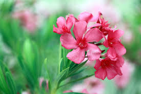List Of Flowers by