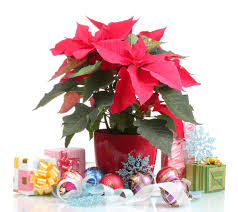 the best house plant gifts for christmas kremp florist blog