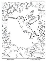 coloring pages hummingbirds hummingbird coloring flower