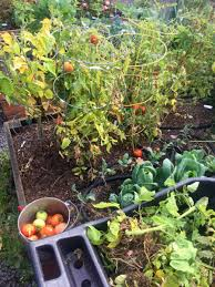 wshg net blog time for fall garden cleanup featured gardeners