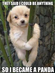 Cute Puppies Meme - awww what an adorable panda puppy see more www