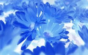 blue flower hd blue flowers wallpaper 7 wide wallpaper hdflowerwallpaper