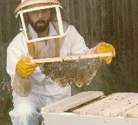 Harvesting Honey From Top Bar Hive Top Bar Beekeeping