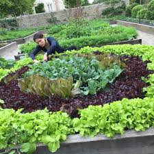 green organic kitchen gardening organic kitchen garden organic
