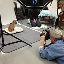 liz greer dog photography u2014 corporate minisessions