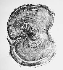 wood print tree ring pine tree print prints posters lintonart