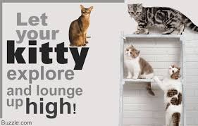 wall mounted cat stairs try these 8 cool ideas to build wall shelves for cats right meow