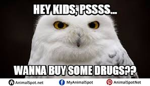 Art School Owl Meme - white owl meme png