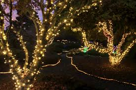 botanical gardens fort bragg ca festival of lights glittering lights sweet treats live music events mcbg inc