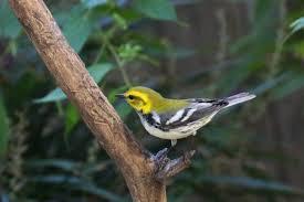 birds in the yard blog