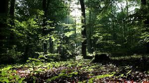 forest backdrop forest backdrop