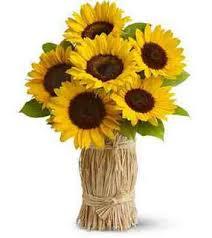 foto wallpaper bunga matahari simbol bunga especially for