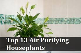 best house plants air purifying houseplants