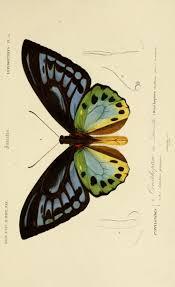 best 25 butterfly illustration ideas on pinterest butterfly