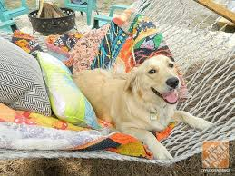 home depot black friday pet beds 224 best a few of our favorite things images on pinterest home