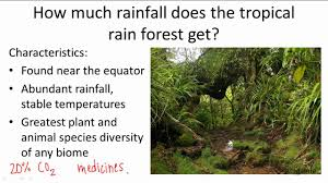 Plant Adaptation In Tropical Rainforest 18 1 8 How Much Rainfall Does The Tropical Rainforest Get Youtube
