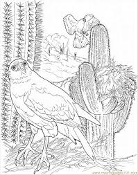 desert owl coloring page 17 best adult coloring pages images on pinterest adult coloring