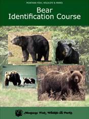 Bears Montana Hunting And Fishing - montana fish wildlife parks bear identification program