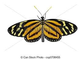 tiger striped butterfly yellow orange and black butterfly stock