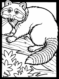 skunk coloring pages raccoon coloring pages coloring pages of raccoon free raccoon