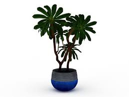 indoor tree plants 3d model 3ds max files free modeling