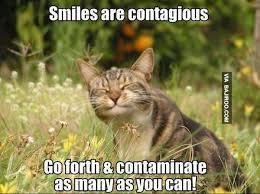 Smile Funny Meme - funny cat smile meme bajiroo com