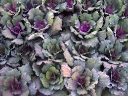 winter flowers for full sun gardening on mars