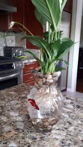 Putting Roses In A Vase 8 Betta Fish U0026 Flower Vase 4 Steps