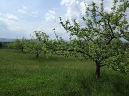 american orchard historical perspectives on food farming and