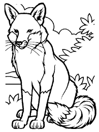 fox drawing fox coloring pages foxy fox pinterest fox