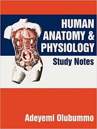 amazon com human anatomy and physiology study notes