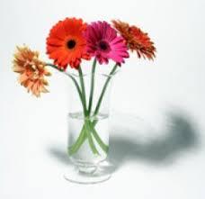 cheap flowers flowers cheap flowers