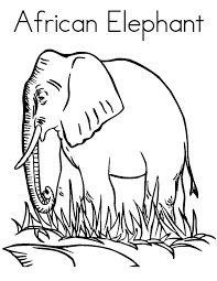 cute big eyed baby african elephant coloring pages coloring sky