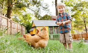 Backyard Chickens 101 by Raising Backyard Chickens In Atlanta